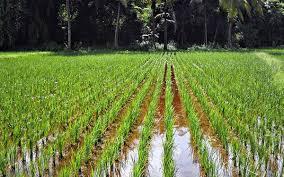 Newly Passed Farm Bills To Liberate Farmers From Trading Cartels: FAIFA